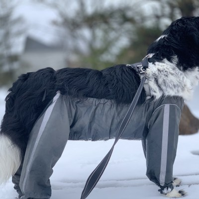Do Protective Dog Pants Really Work?