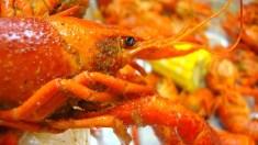뉴올리언즈에서 크로피쉬 요리 먹어보기
