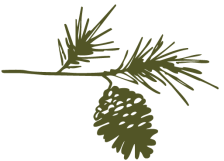 Pinecone Doodle