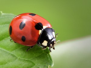 Ladybug Release @ Comal County Extension Services | New Braunfels | Texas | United States