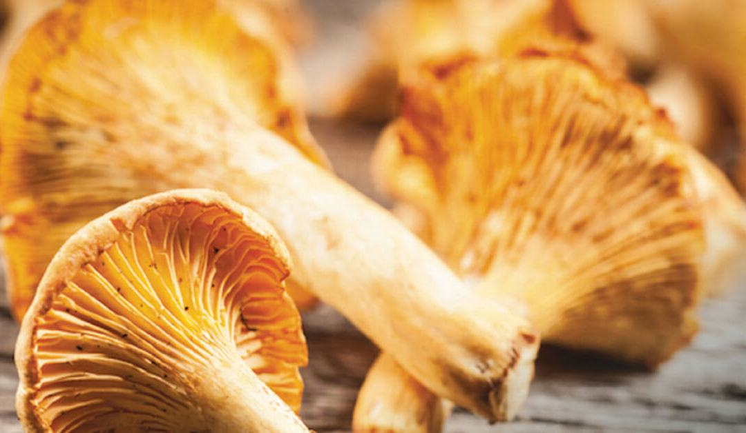 Marco Polo Cebu highlights special mushroom in culinary event 'Weekend with Chanterelles'