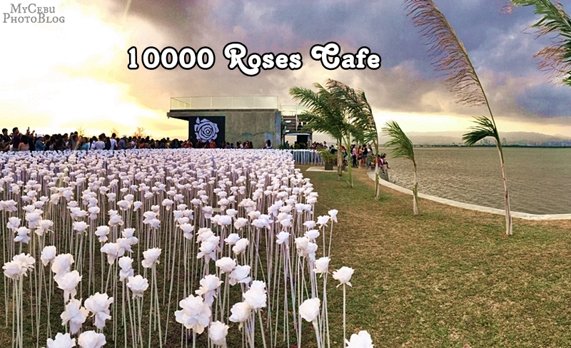 10,000 Roses Cafe: Cordova's Ten Thousand Blooms