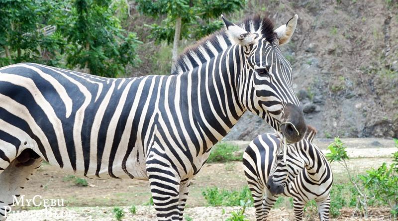 In Photos: My First Time at the Cebu Safari & Adventure Park