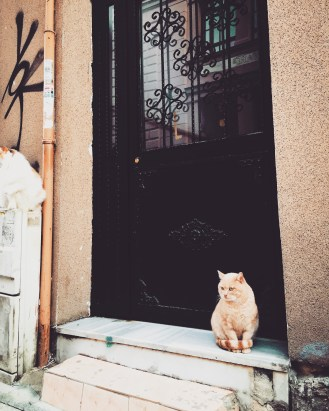 Istanbul's infamous stray cats