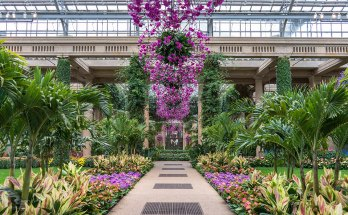 Longwood Gardens Orchid Extravaganza on View January 18 Through March 22