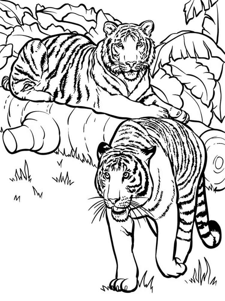 tigers coloring pages download and print tigers coloring pages