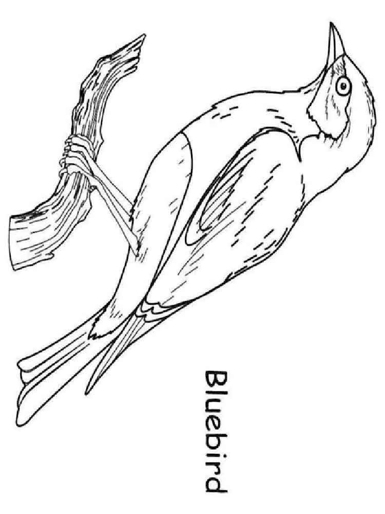 bluebird coloring pages download and print bluebird coloring pages