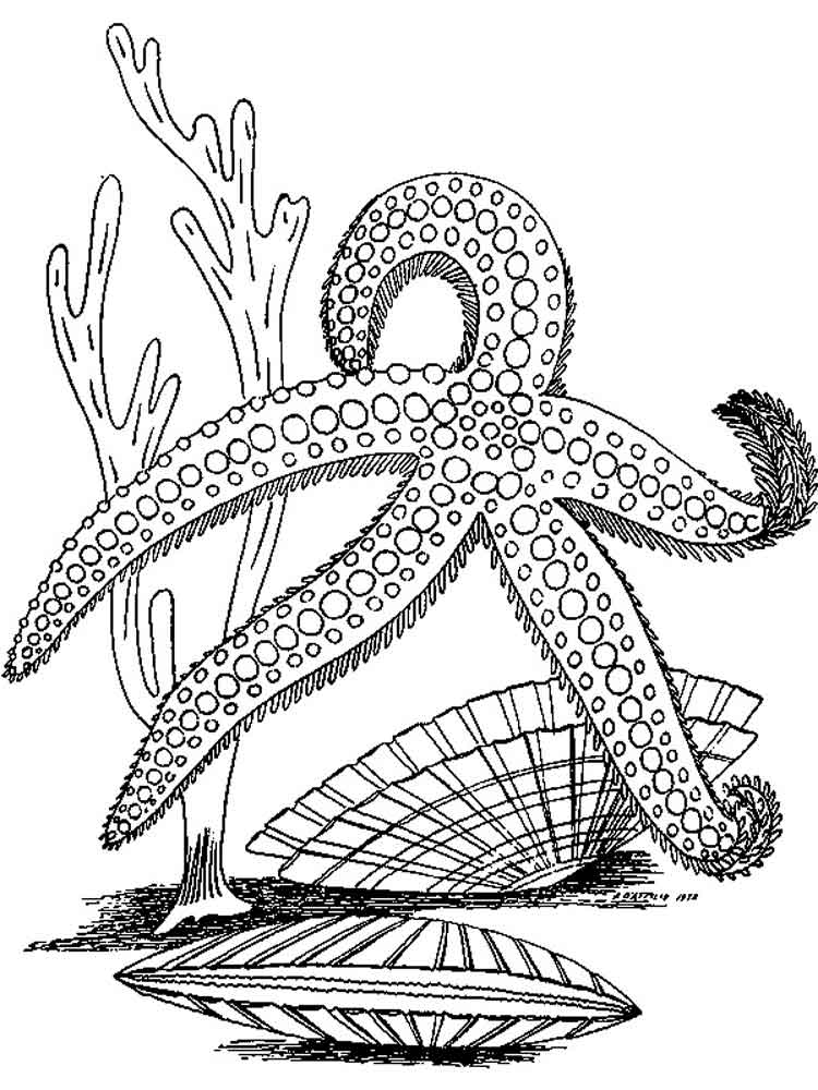 starfish coloring pages download and print starfish coloring pages