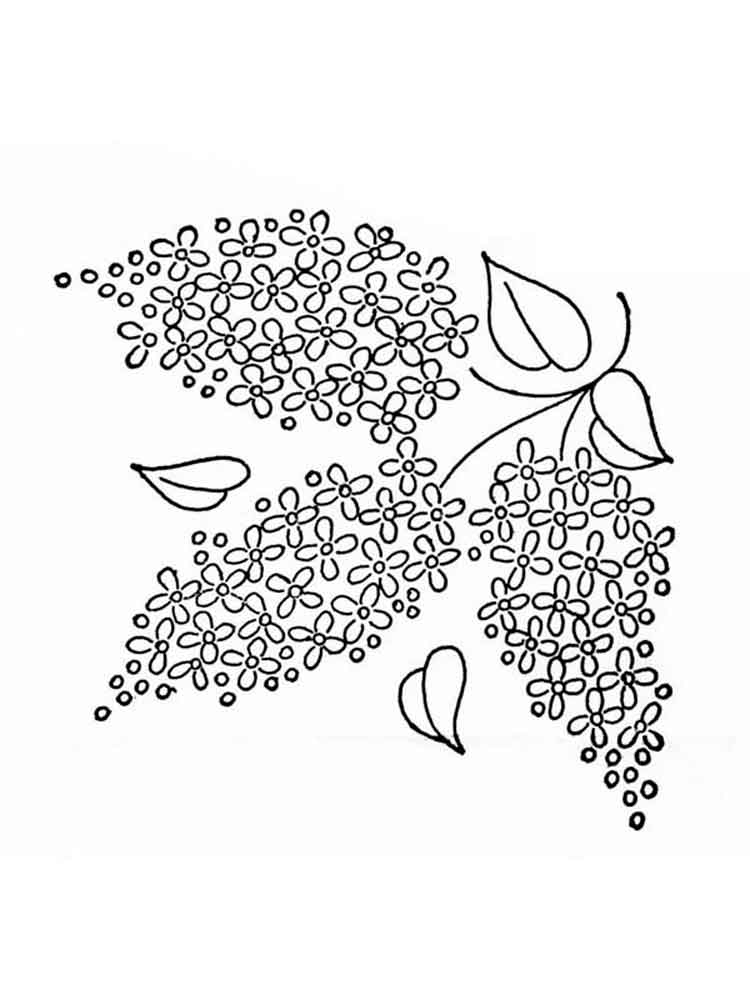 Lilac Flower Coloring Pages Download And Print Lilac