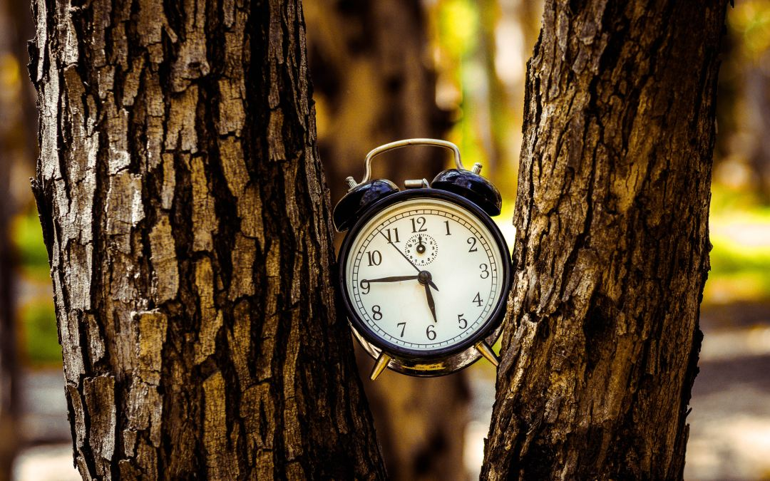 Joyology101: Why Make the Argument for Your Unworthiness of Heaven Alarm clock stuck between two tree trunks