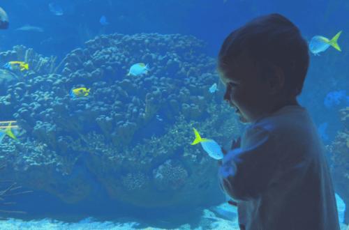 El Oceanogràfic de Valencia, el acuario más grande de Europa