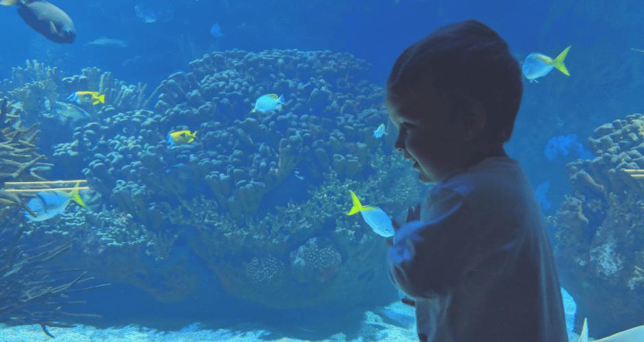 oceanografic - El Oceanogràfic de Valencia, el acuario más grande de Europa