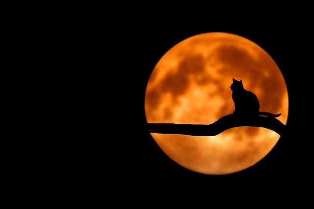 animal branch cat 35888 - Halloween para niños