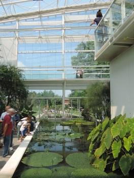 Water lilies , Botanical Garden in Padua