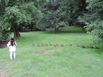 16 Ducks and 1 girl, Parco Querini