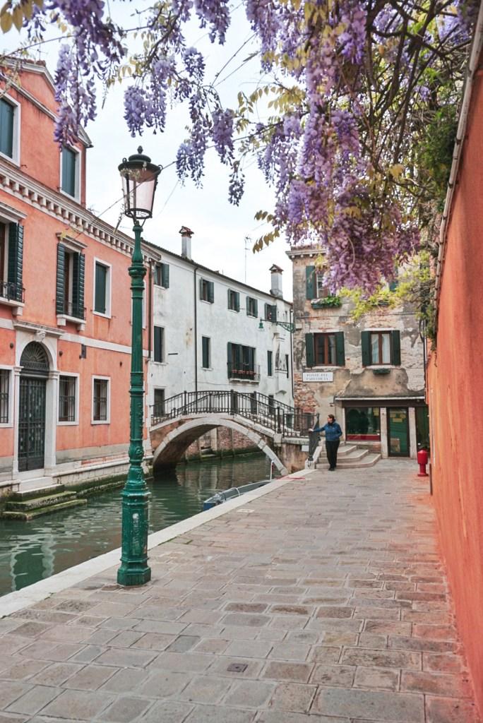 Wisteria in Venice, Salizada Carminati
