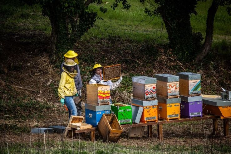 The bees, photo courtesy of Podere Trafonti