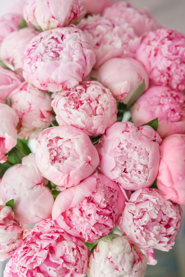 Stunning pink bouquet of peonies