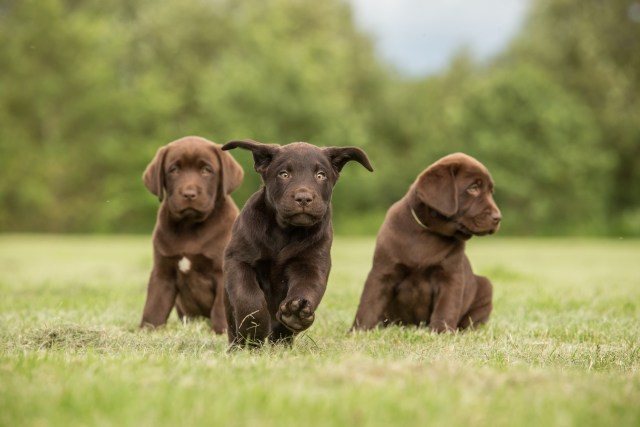 For a well-adjusted puppy, it needs socializing with as many dogs, people and surroundings as possible. Here are 4 tips you need to know...