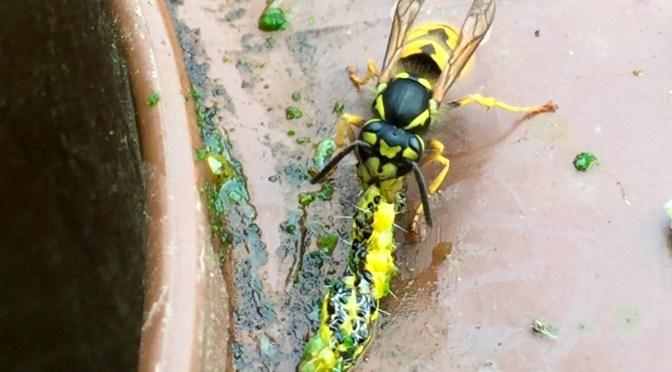 German wasps 12675 mycraftsandgarden