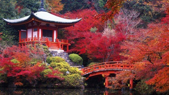 la culture du thé au Japon