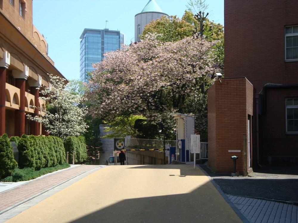 Harajuku, Shibuya and a Visual Kei Live (5/6)