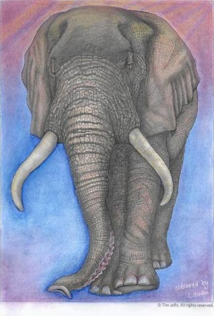 Contest Intricate Animals in Detail by Tim Jeffs