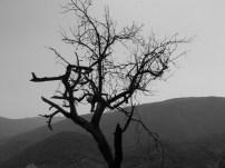B and W tree