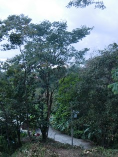Looking roughly north west back toward the street with Casa Pura Vista in the distance behind the trees.