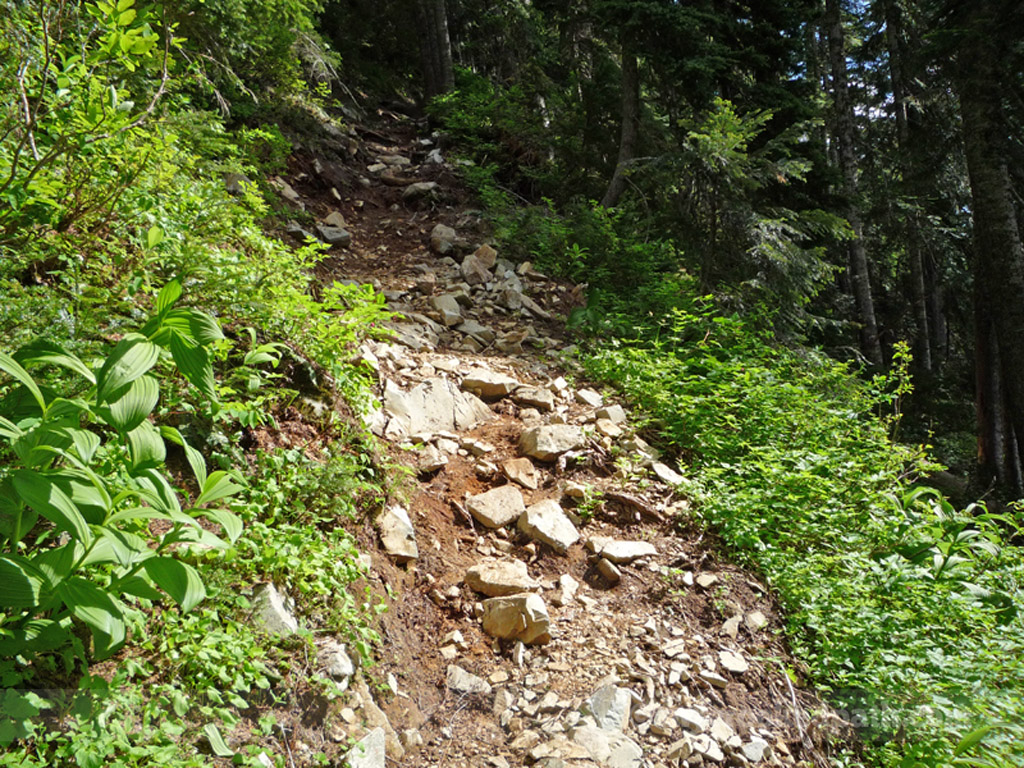 This is looking uphill – again, much steeper than it looks.