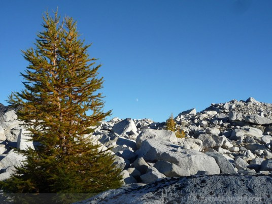 Larch and Moon