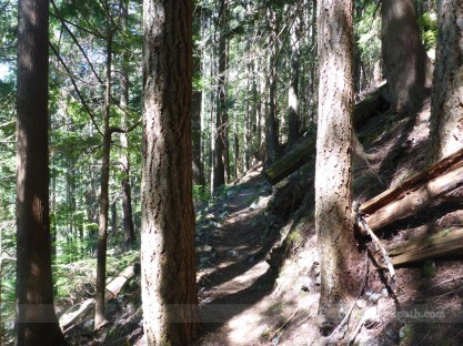 Dense forested trail