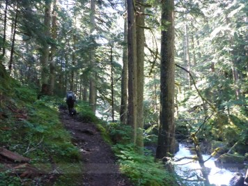 Lower Elliot Creek trail