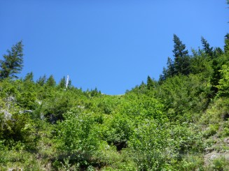 Hey, there's a geocache up there somewhere. No, I did not get it.