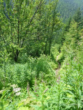 Down the brushy trail