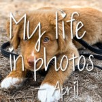 My life in photos – april 2021 #3