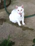 Bunnie - Maw Maw's cat