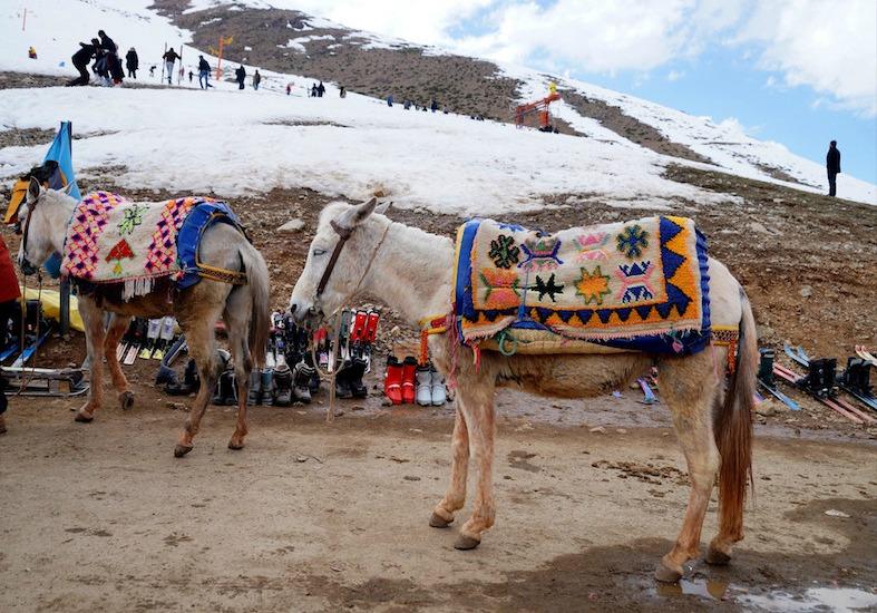 marokko-ski-wintersport-Oukaïmeden