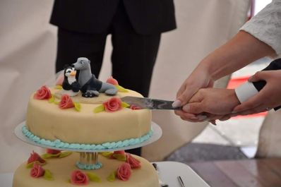 Steve's Penguin and Seal Cake Topper 3