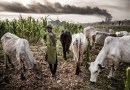 Six Vital Sections of Lagos Anti-Open Grazing Bill You Need To Know