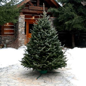 five star christmas tree co takes the sticky sap and heavy lifting out of shopping for christmas trees delivering sweet smelling fraser firs to your