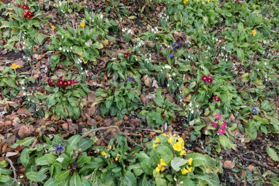 Brightening up a north facing slope