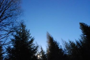 Evening light at Kindrogan