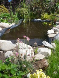 The pond in the beginning