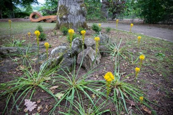 Underplanting