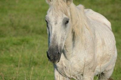 myddelton-gallery-grey-horse