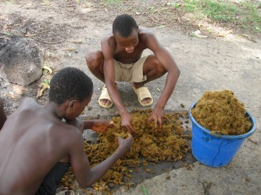 it's tedious -- how to make palm oil from palm nuts