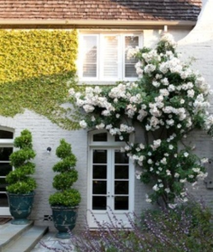 Climbing plants and outdoors5