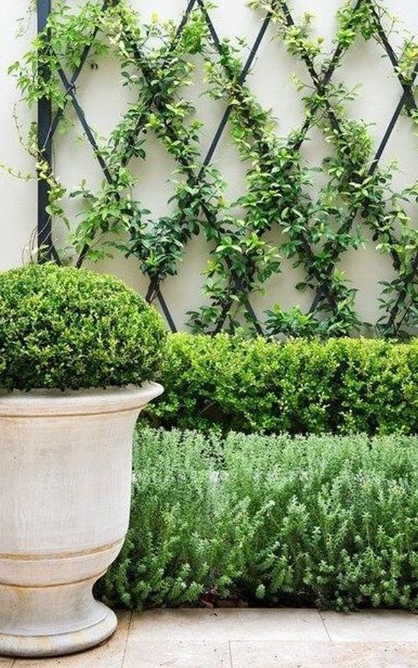 Climbing plants ideas11