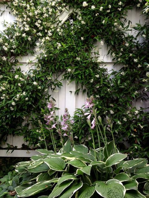 Climbing plants ideas8